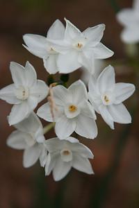 Various Flowers 2009-5490