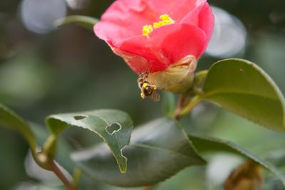Various Flowers 2009-5473