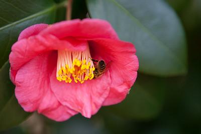 Various Flowers 2009-5468