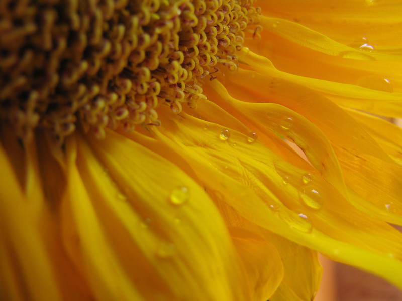 "This image recently awarded ""Best Plant"" in the Friends of Danada Nature Art show 10/7-10/9/11"