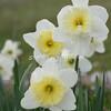 2010, 03-19 410 Flowers (111)