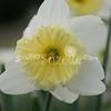 2010, 03-19 410 Flowers (112)