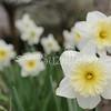 2010, 03-19 410 Flowers (115)