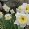 2010, 03-19 410 Flowers (116)