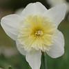 2010, 03-19 410 Flowers (119)