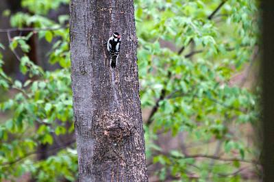 May 14 woodpecker