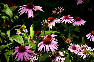 20130724 Backyard Flowers-2088-V3