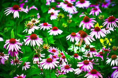 20130724 Backyard Flowers-2032