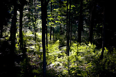 20130724 Backyard Trees-1996