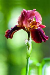 20130615 Iris-9118 v2