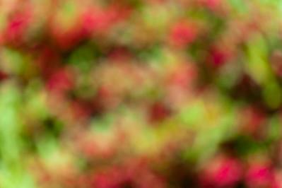 20130614 Flowers-9007