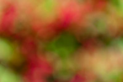 20130614 Flowers-9008