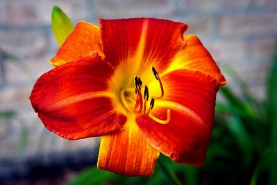 20140706 Daylilies-9717 v2