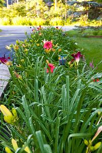 20140715 Flowers-0184