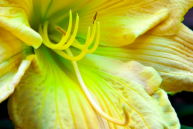 20140707 Daylilies-9775 edited v3