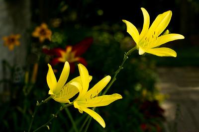 20150722 Daylily Garden-0865 edited