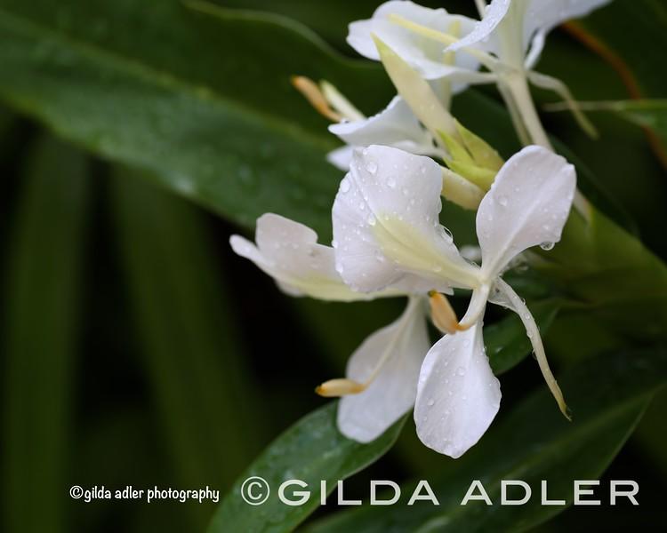 © gilda adler photography 2014