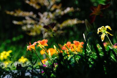 20160720 Flowers-2254