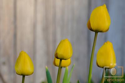 Spring Flowers 2014 2