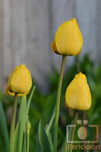 Spring Flowers 2014 3