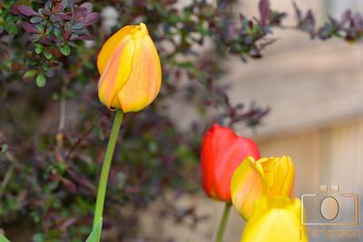 Spring Flowers 2014 1