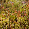 Moss.  Green Hills of Platte Park. 4/11/09
