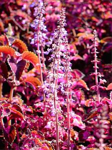 Kodachrome  Chicago Flowers