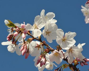 Cribari_Flowers_03272010-001