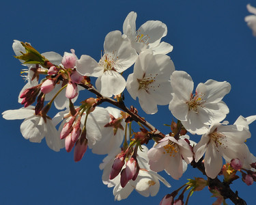 Cribari Flowers