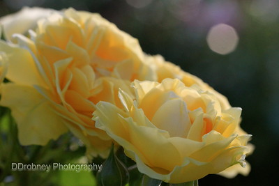 It was an amazing day for shooting roses.