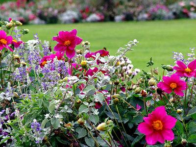 Flowers at Jardin du Luxembourg, Paris France