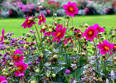 Flowers at Jardin du Luxembourg, Paris France
