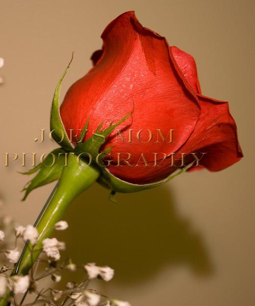 Rose Bud I