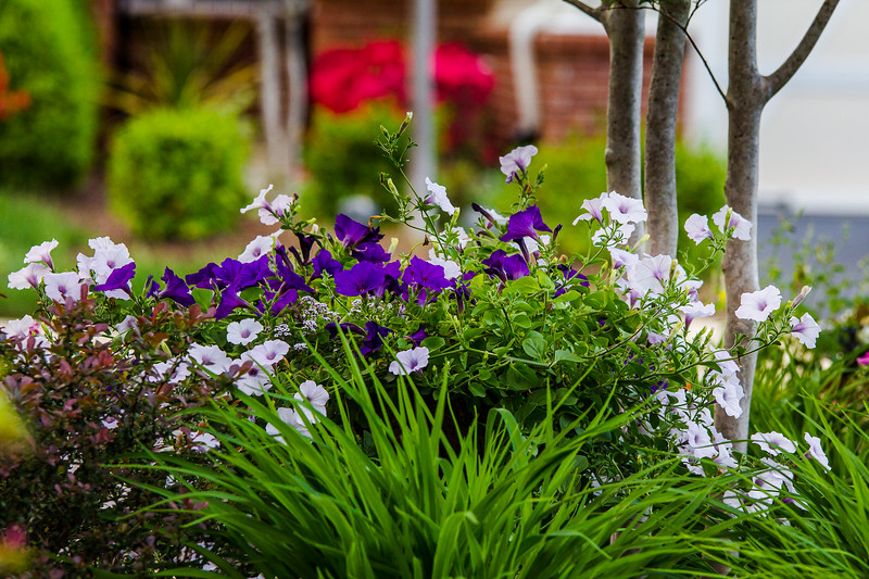 flowers at home-10_May 13, 2014