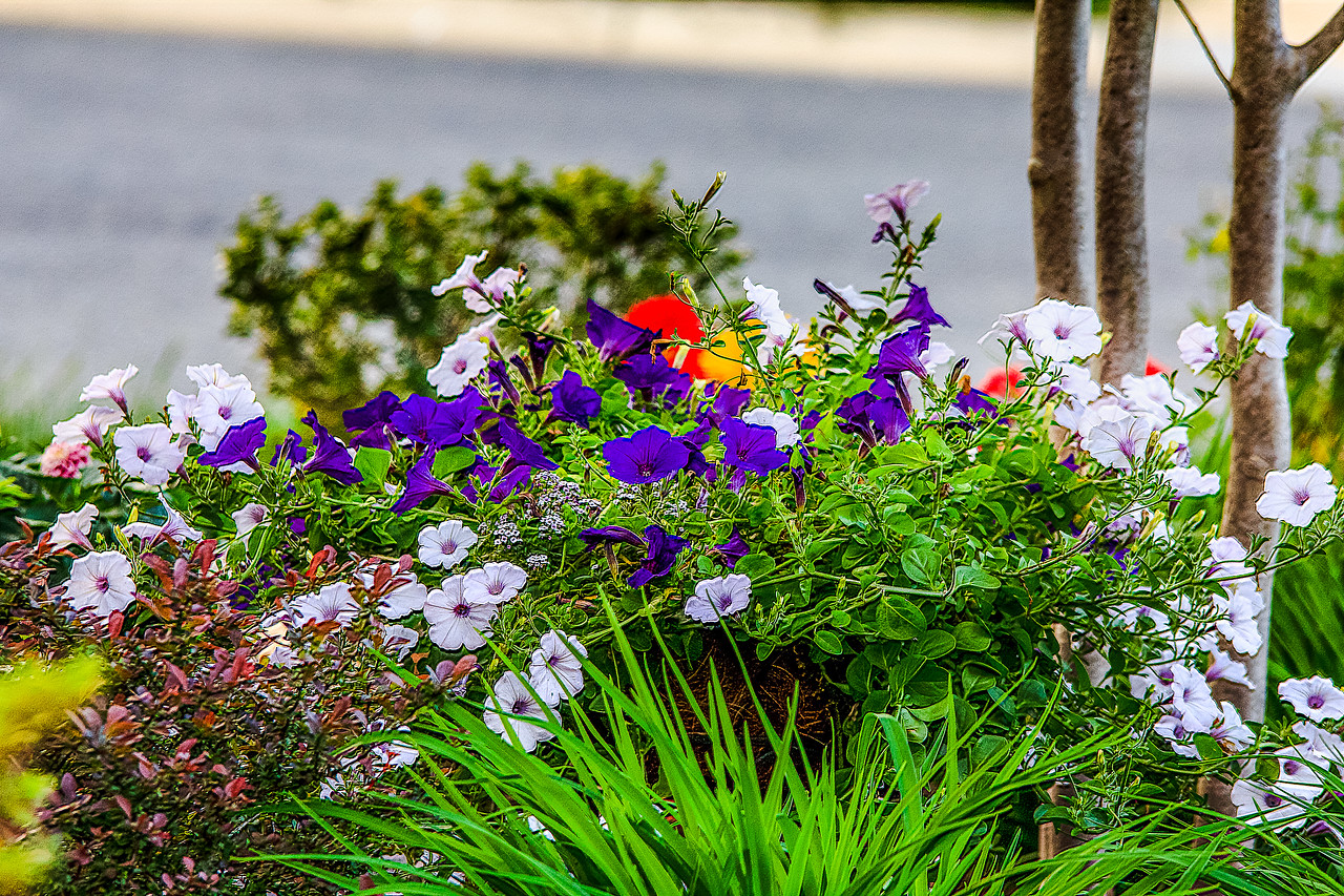 flowers at home-20_May 13, 2014-Edit