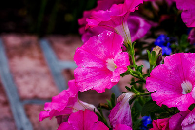 flowers at home-61_May 12, 2014