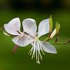 Singen Flowers-0651Z