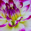 Singen Flowers-0357Z