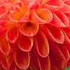 Singen Flowers-0657-01Z