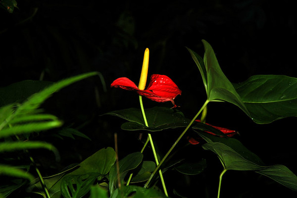 Flowers of The Penang Tropical Spice Garden