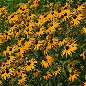 Garden Flowers: 2006