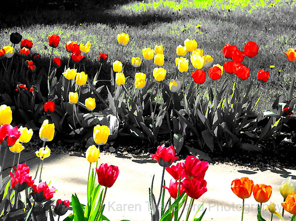 Whimsical Tulips