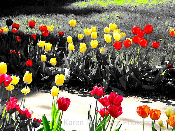 Whimsical Tulips
