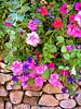 Vail Flowers Rock Garden