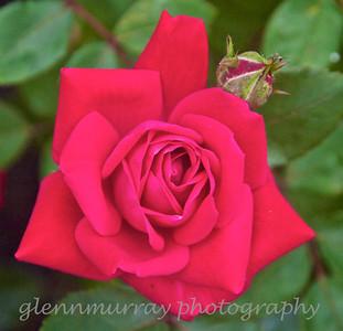 Glen Park flowers 05-27-12