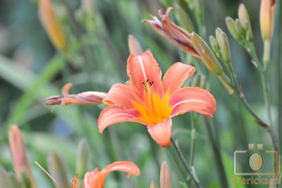 June Flowers 2013 1