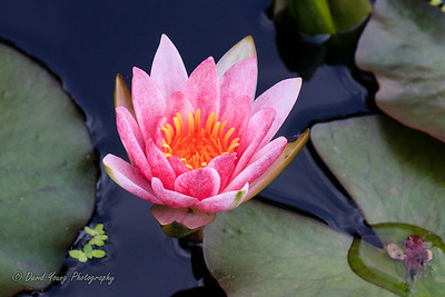 Longwood Gardens-116_August 21, 2014