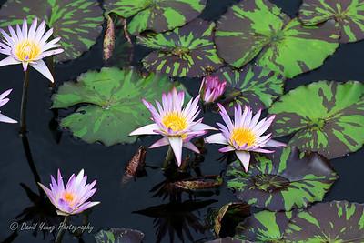 Longwood Gardens-121_August 21, 2014