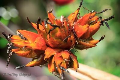 Longwood Gardens-105_August 21, 2014