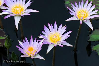 Longwood Gardens-120_August 21, 2014
